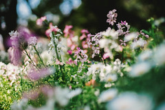 Flowers (joxar) Tags: plants flower japan 35mm garden contax bloom 植物 50mmf14 planar carlzeiss α7 oldlens ilce7