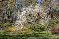 Łazienki (Ibérica) Tags: park parque naturaleza primavera flora plantas samsung poland polska warsaw polonia warszawa jardín varsovia wiosna przyroda lazienki łazienki rośliny ogród roliny