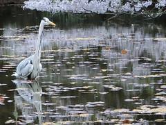 池 沼の壁紙プレビュー
