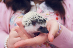 Baby hoge (MintyMix) Tags: new baby cute up fashion orleans sweet small lolita hedgehog meet freed birthed mcnubbin freehim