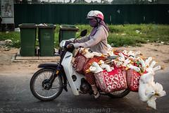 _DSC8748 (Jason WastePhotography) Tags: city travel bridge light mountain girl hat night children japanese duck asia south north vietnam moto hanoi hue saigon seller cyclo motobike