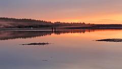 ...fiske i kvällsdimmor  /...fishing in the evening mist (srchedlund) Tags: uteistugan natursommar kvällsfiske fishing sunset kvällsdimmor srchedlund norrbotten brändön furufjärden lågvatten lowwater atmospheric shallowwaters