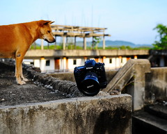 ,, The Look of Suspicion ,, (Jon in Thailand) Tags: roof dog abstract stairs mammal nikon reptile alien cement mama jungle andywarhol nikkor prop k9 d300 d1x inanimateobject 175528 animateobject campbellssoupcan littledoglaughedstories thedogpalace