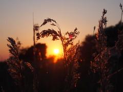 Solnedgang ved Mygget Vig (:NFR:) Tags: sunset backlight solnedgang falster