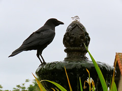 """Quoth the Raven, Nevermore.."" (Bennilover) Tags: california bird water fountain birds poetry poem drinking quotes mission crow fountains raven ornithology poe sanjuancapistrano edgarallanpoe nevermore"