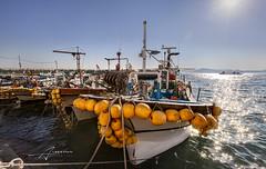 Busan, Korea (Albert Photo) Tags: sea port boat korea transportation busan seafood shipping southkorea seaport filmfestival bustling