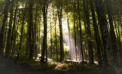 Magic (Yoli in Wonderland) Tags: trees light naturaleza sunlight nature forest landscape woods ray arboles shadows adi monte montaa sombras navarra quintoreal