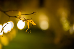 Another Bokeh (*Capture the Moment*) Tags: leica light leaves sony pflanzen bltter summilux a7 lichter mii 2015 nachtaufnahmen kabinettsgarten allerheiligenhofkirche 75mm14 summilux75mm14 munichnightwalk
