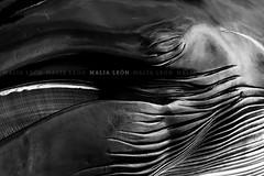 Lluvia (Malia Len ) Tags: water animal canon lluvia agua gente huelva playa arena help sos temporal ballena ayamonte ayuda humanidad acutico emocin varada puntadelmoral rorcual malialeon