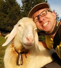 Love at the first sight (alpenbild.de) Tags: sheep wank garmischpartenkirchen selfie schaf selbstportrt ralfblumenschein