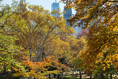 New York (4 of 17).jpg (yaarus) Tags: usa newyork centralpark manhattan unitedstatesofamerica vs verenigdestaten
