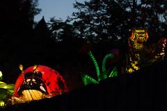 _DSC9597_2 (Elii D.) Tags: light fish flower animal night zoo monkey neon dragons lantern lampion dargon