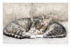 Marrakech Cats (craig315) Tags: africa nikon streetphotography morocco craig marrakech medina crawford d5300 nikon18105