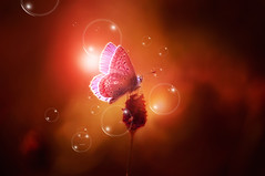 """Kissing bubbles...."" (Ilargia64) Tags: pink orange abstract macro love nature beauty butterfly colorful bubbles fairyland warmcolors fantasyworld butterflyskisses"