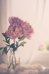 When in doubt, add peonies! (RoCafe) Tags: pink flowers light stilllife soft pastels peonies nikond600 nikkormicro105f28