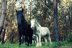 Pompéjac - Pinpin et Pilou (14) (Office de Tourisme du bazadais) Tags: et parc pinpin rennes pilou landes gironde animalier bazadais sudgironde girondines pompéjac