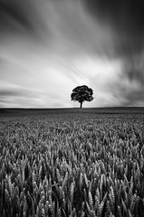 Proud II (David Ball Landscape Photography) Tags: storm sky canon clouds cloudsstormssunsetssunrises cloudy fineart landscape landscapes photography outdoors leefilters longexposure nature light moody mono monochrome blackwhite blackandwhite davidballlandscapephotography tree crop
