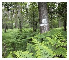 Rennes Forest #6 (Oeil de chat) Tags: fujifilm x20 couleur foret vert nature serie promenade