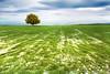 Campos en verde (Inmacor) Tags: españa naturaleza tree verde primavera nature landscape arbol spring paisaje uno ltytr2 ltytr1 useras inmacor