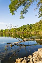 Joy and Sadness (gauss2402) Tags: lake reflection fall illinois rocks evergreen bloomington 2014