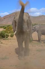 Time to play (sabinesie) Tags: holiday elephant animal southafrica sommer wildlife natur natura safari afrika elefant sonne ferien animali südafrika elefante wildanimals rüssel sawane sabinesie
