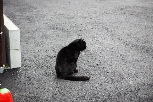 Today's Cat@2015-03-17