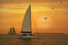 Sunset sail (Cat Girl 007) Tags: ocean sunset sea summer vacation sky orange usa sun holiday seascape tourism gulfofmexico nature water birds sport sailboat boats outside outdoors freedom evening wings sailing ship florida yacht horizon relaxing lifestyle peaceful calm tropical romantic dreamy leisure nautical keywest activity relaxation atlanticocean floridakeys sunshinestate thekeys traveldestination magicunicornverybest elné