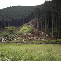 Ujitawara (Tetsu Hiraga) Tags: forestry cedar portra400 mamiya7 cryptomeriajaponica