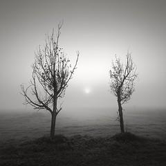 Shall we dance? (ilias varelas) Tags: trees light blackandwhite bw sun mist nature monochrome field fog landscape dance mood greece land ilias varelas