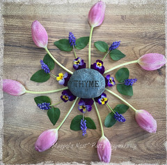 Spring Mandala (~*~ MagpiesNest) Tags: pink blue green spring tulips mandala thyme muscari playonwords violas