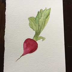 Daily drawing challenge day 17: radish... (leeleebelle) Tags: art watercolor drawing radish makingart dailydrawing watercolorpainting uploaded:by=flickstagram cbdrawaday ufdraws uwtfdraws instagram:photo=116461512770845812450481782