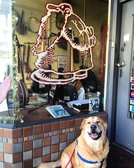Fellow #robertcrumb fan Brutus poses in front of Mr. Natural's Music School, run by the real Mr. Natural (his legal name since 1973)  (seanflannagan) Tags: sanfrancisco dog comics haightashbury brutus robertcrumb mrnatural rcrumb zapcomix undergroundcomix mrnaturalsmusicschool