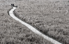a long and winding road... (marianna armata) Tags: park woman ontario canada man monochrome bench walking landscape couple aerial diagonal pont boardwalk marsh pele p2370103