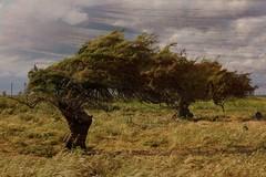 Longanimity (SolanoSnapper) Tags: northerncalifornia solanocounty creedroad