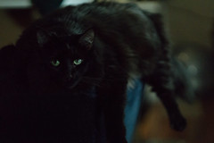 Shadow (Jesse Seilhan) Tags: shadow cat blackcat fat cutecat babycat instacat sonya6000