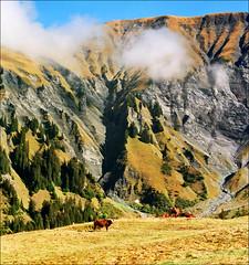 Megeve (Katarina 2353) Tags: summer mountain france alps film landscape nikon europe megeve katarinastefanovic katarina2353