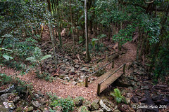 The lower path (NettyA) Tags: bridge trees forest bench walking drycreek rainforest rocks track path seat australia palm trail qld queensland sunshinecoast basalt mapleton 2016 hinterland bangalowpalm seqld piccabeenpalm