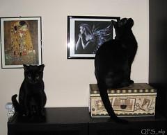 Faerie Word by QFS_mlp (QueenFaeeStudio) Tags: cats felini gatti mici katze gatos blackcat catseyes black nero gatto blackcats gioco game fun havingfun magic faee fairyland faerie canon