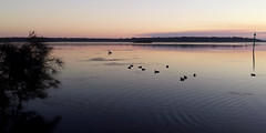 quiet time (hollandgs) Tags: s4 lake sunset dusk water birds