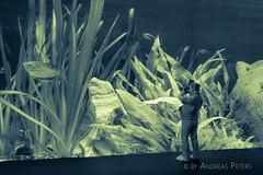 DSC04077_s (AndiP66) Tags: fotograf photographer scott figur figure scale 118 sony sonyalpha 77markii 77ii 77m2 a77ii alpha ilca77m2 slta77ii sigma 1835mm sigma1835mmf18 andreaspeters