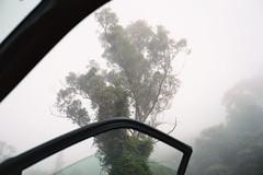 Barrengarry NSW, 2016 (jamiehladky) Tags: barrengarry nsw film 120 portra tree australia car door lookingup jamiehladky hladky forest fog mist vine creeper