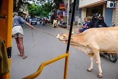 Street life, Chennai (Fabionik) Tags: 2016 chennai india tamilnadu