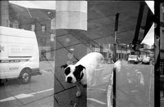 Dog love (Jim Davies) Tags: film analogue expired olympus35dc cosmicsymbol filmswap doubleexposure serendipity blackandwhite monochrome 125asa filmfilmforever boingboing ilford fp4