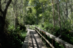 walkway in the woods (pacific snapper) Tags: california events places vacations cambriaetc cambria2015