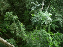 Above The Canopy in Guiana Rainforest