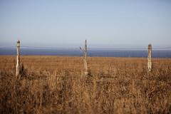 three (eb78) Tags: california ranch ca fence mendocino littleriver springranch