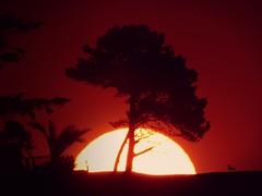 Atardecer en rojo.. (ramosandreita2) Tags: sunset red naturaleza sun bird sol arbol natural