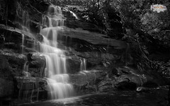 Black Water Falls (4k) (Take a Squiz Photography) Tags: grey gray blackwhite bough bushland d3 horizontal landscapephotography leaf naturephotography nikon outdoor rock somersbyfalls summer tree water waterfall australia monochrome fx2470mmf28 monotone longexposurephotography fluviallandforms monochromephotography morning daytime element nikkor nikond3 au dslr nikonfx2470mmf28 2470mmf28 wallpaper1610 1610 16x10 wallpaper 4k uhd hd ultrahighdefinition