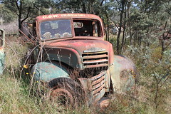 Fordson Thames Truck (jeremyg3030) Tags: cars ford abandoned thames yard truck junk wrecking fordson cooma flynns