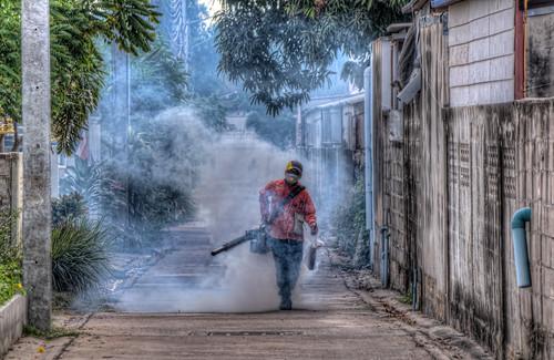 Mosquito terminator